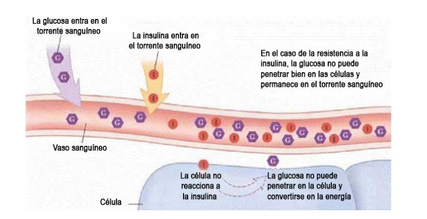 Glyconorm Precio